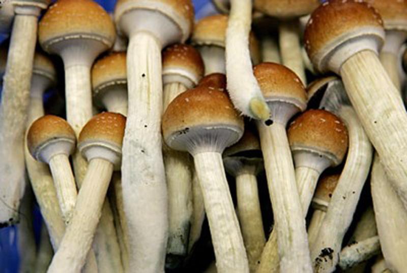 года можно ли курить грибы Круг стальной Показать