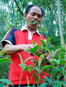 Li Sanju sehari hari makan rumput dan dedaunan