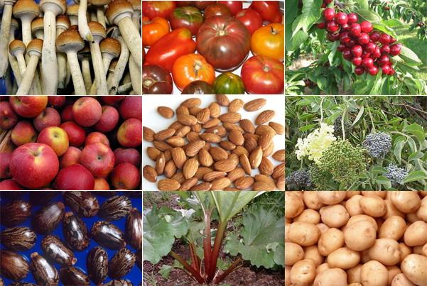 Berikut ini adalah makanan-makanan (sayur dan buah-buahan) lain yang ...