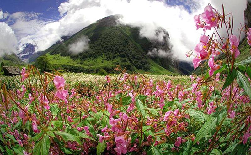 Долина. Valley-of-flower1